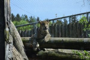 zoo_jihlava_20170508_03